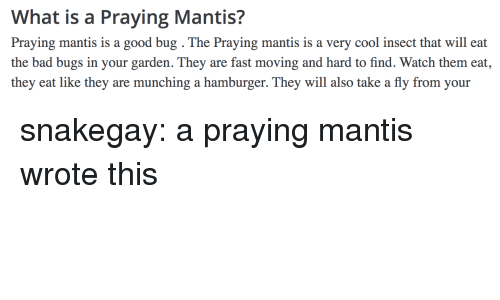 Bad, Tumblr, and Blog: What is a Praying Mantis?  Praying mantis is a good bug . The Praying mantis is a very cool insect that will eat  the bad bugs in your garden. They are fast moving and hard to find. Watch them eat,  they eat like they are munching a hamburger. They will also take a fly from your snakegay: a praying mantis wrote this