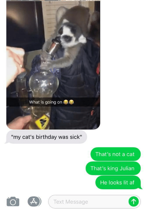 "Lit AF: What is going on  ""my cat's birthday was sick""  That's not a cat  That's king Julian  He looks lit af  Text Message"