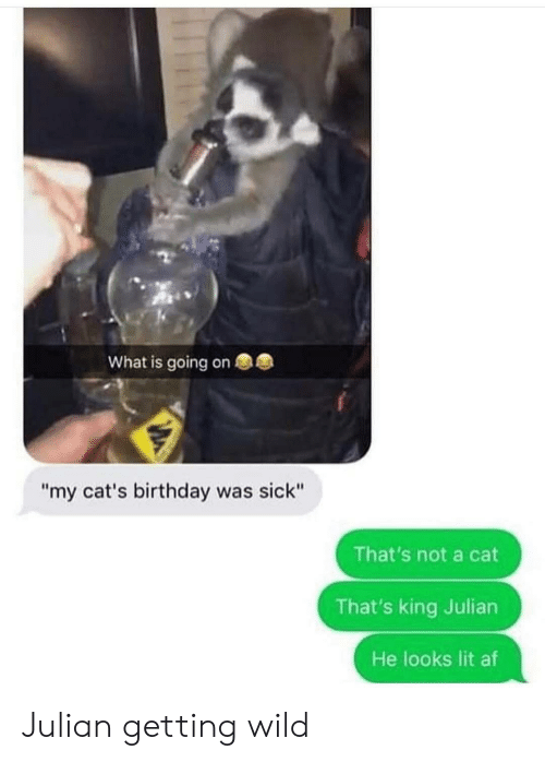 "Lit AF: What is going on  ""my cat's birthday was sick""  That's not a cat  That's king Julian  He looks lit af Julian getting wild"