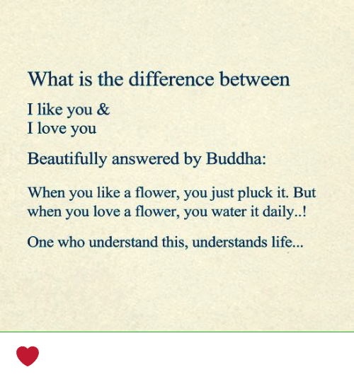 Memes, Buddha, and 🤖: What is the difference between  I like you &  I love you  Beautifully answered by Buddha  When you like a flower, you just pluck it. But  when you love a flower, you water it daily.  One who understand this, understands life. ❤️