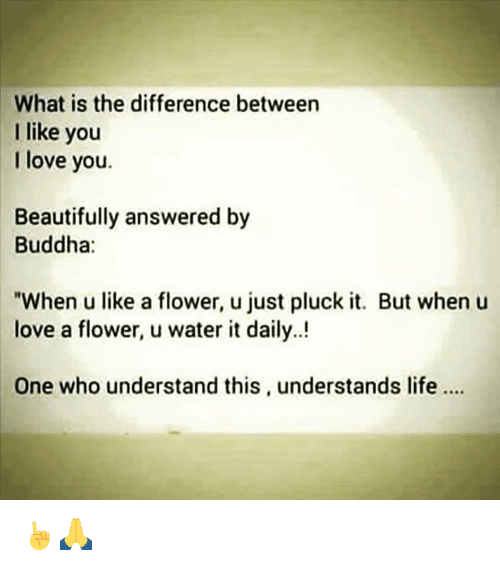 """Memes, I Love You, and Buddha: What is the difference between  I like you  I love you.  Beautifully answered by  Buddha:  """"When u like a flower, u just pluck it. But when u  love a flower, u water it daily.  One who understand this, understands life ☝🙏"""