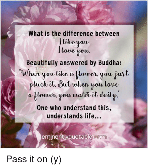 Memes, Buddha, and 🤖: What is the difference between  I like you,  lowe you.  Beautifully answered by Buddha  When you like a blower, you just  pluck it. But when you love,  a klouner, you traten it daily  One who understand this  understands life...  eminently quotable co Pass it on (y)