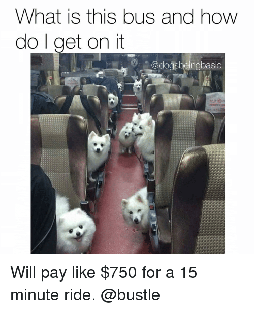 Memes, 🤖, and Bus: What is this bus and how  do get on it  (@dogsbeingbasic Will pay like $750 for a 15 minute ride. @bustle