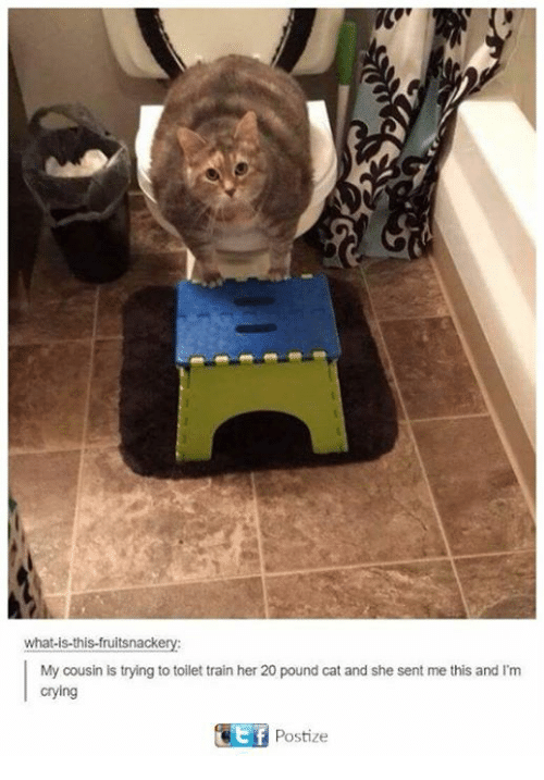 Crying, Dank, and Train: what is this fruitsnack  My cousin is trying to toilet train her 20 pound cat and she sent me this and l'm  crying  Postize