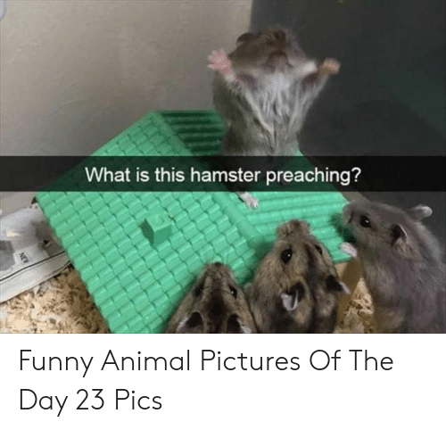 Hamster: What is this hamster preaching?  NEW Funny Animal Pictures Of The Day 23 Pics