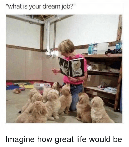 """Life, Memes, and What Is: """"what is your dream job?""""  00D  DOG Imagine how great life would be"""