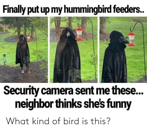 What Kind Of: What kind of bird is this?