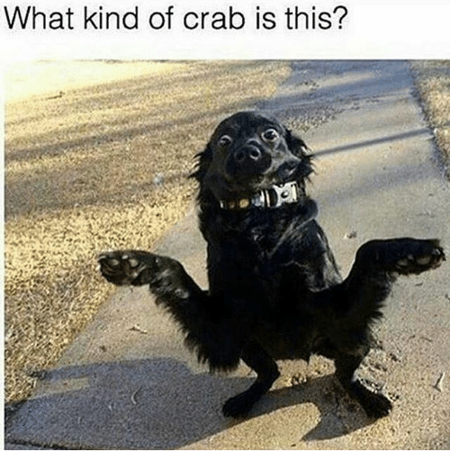 Dank Memes, Crab, and Crabs: What kind of crab is this?