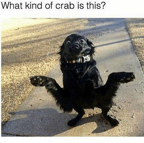 crabbing: What kind of crab is this?