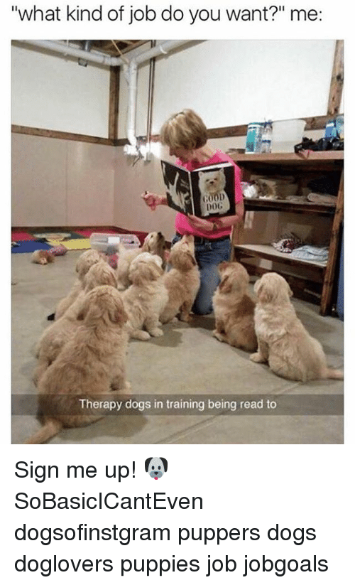 """Dogs, Memes, and Puppies: """"what kind of job do you want?"""" me:  COOD  DoC  Therapy dogs in training being read to Sign me up! 🐶 SoBasicICantEven dogsofinstgram puppers dogs doglovers puppies job jobgoals"""