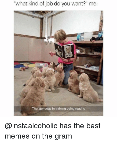 """Dogs, Funny, and Memes: """"what kind of job do you want?"""" me:  COOD  DOC  Therapy dogs in training being read to @instaalcoholic has the best memes on the gram"""