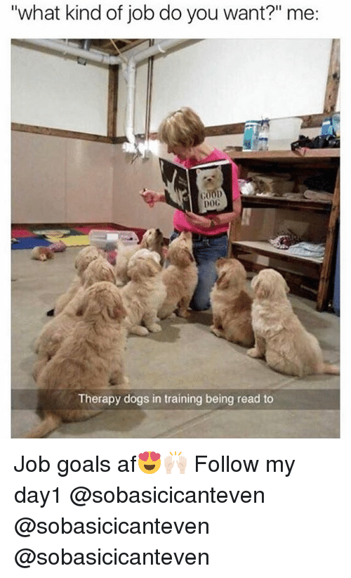 """Af, Dogs, and Funny: """"what kind of job do you want?"""" me  DoG  Therapy dogs in training being read to Job goals af😍🙌🏻 Follow my day1 @sobasicicanteven @sobasicicanteven @sobasicicanteven"""