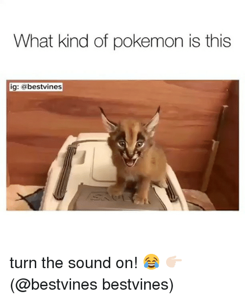 Memes, Pokemon, and 🤖: What kind of pokemon is this  ig: abestvines turn the sound on! 😂 👉🏻(@bestvines bestvines)