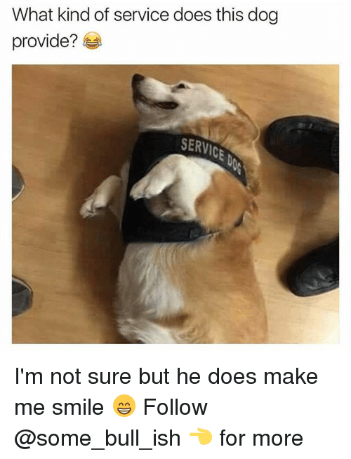Memes, Smile, and 🤖: What kind of service does this dog  provide?  SERVIC I'm not sure but he does make me smile 😁 Follow @some_bull_ish 👈 for more