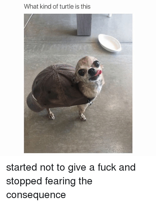 Girl Memes: What kind of turtle is this started not to give a fuck and stopped fearing the consequence