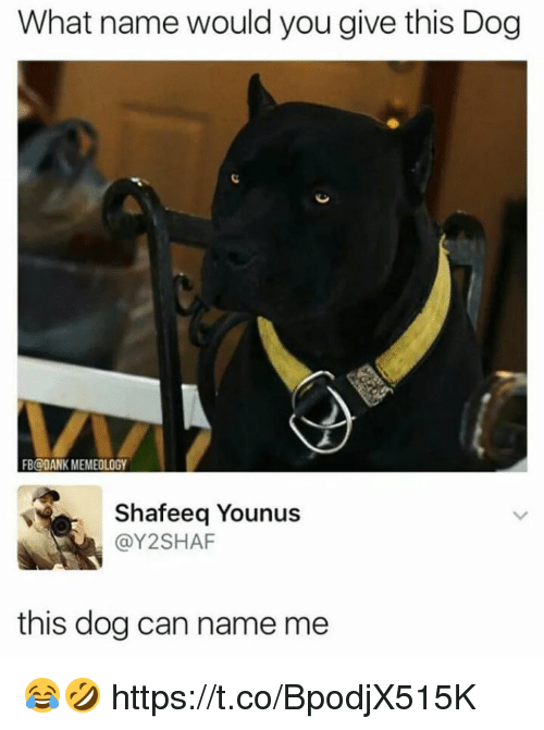 Dank, Dog, and Can: What name would you give this Dog  B@DANK MEMEOLOGY  Shafeeq Younus  @Y2SHAF  this dog can name me 😂🤣 https://t.co/BpodjX515K