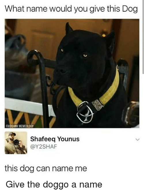 Dank, Memes, and 🤖: What name would you give this Dog  FB@DANK MEMEOLOGY  Shafeeq Younus  @Y2SHAF  this dog can name me Give the doggo a name