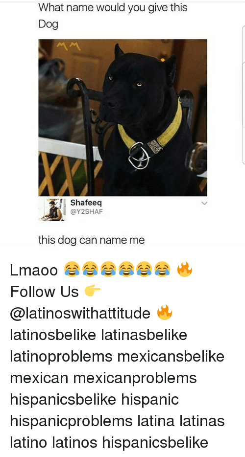 Latinos, Memes, and Mexican: What name would you give this  Dog  Shafeeq  @Y2SHAF  this dog can name me Lmaoo 😂😂😂😂😂😂 🔥 Follow Us 👉 @latinoswithattitude 🔥 latinosbelike latinasbelike latinoproblems mexicansbelike mexican mexicanproblems hispanicsbelike hispanic hispanicproblems latina latinas latino latinos hispanicsbelike