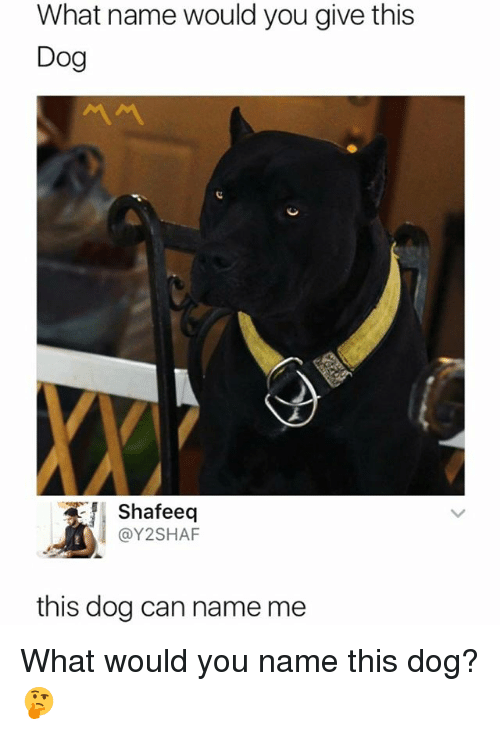 Dank Memes, Dog, and Can: What name would you give this  Dog  Shafeeq  @Y2SHAF  this dog can name me What would you name this dog? 🤔