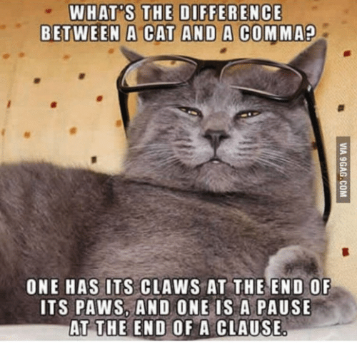 what are the differences between cats