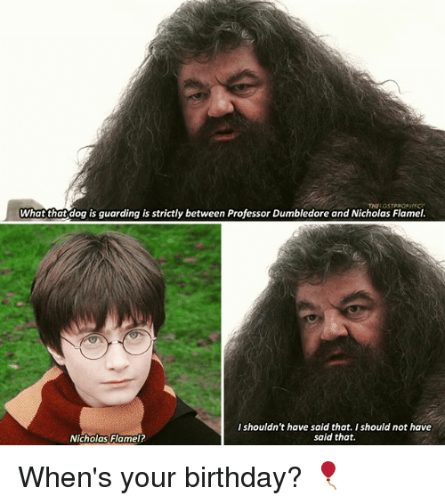 Birthday, Dumbledore, and Memes: What that dog is guarding is strictly between Professor Dumbledore and Nicholas Flamel.  I shouldn't have said that, I should not have  said that.  Nicholas Flamel? When's your birthday? 🎈