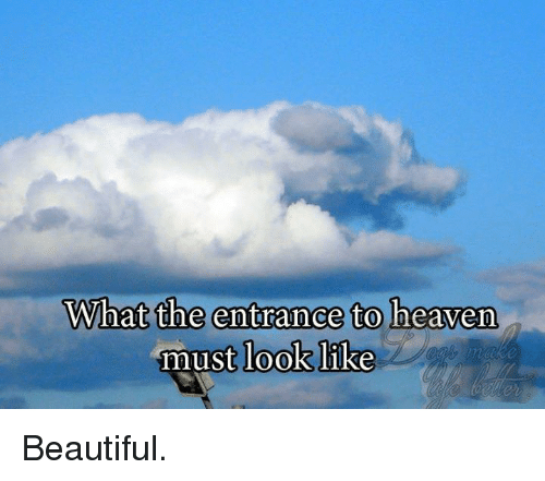 Dogs Tab Com What The Entrance To Heaven Must Look Like Heaven Meme On