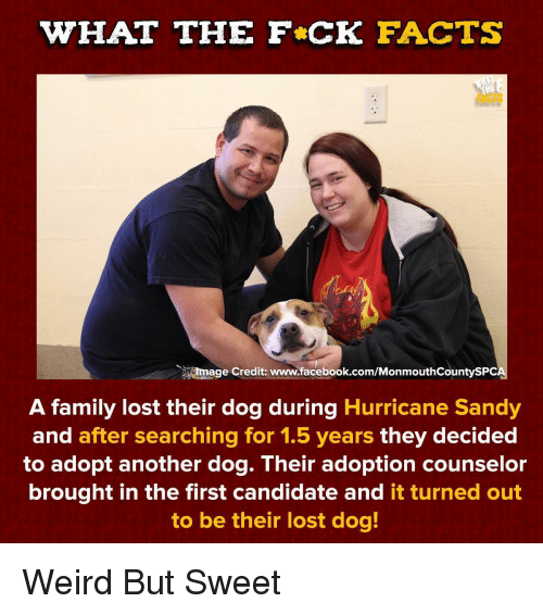 sandy: WHAT THE F CK FACTS  FACTS  tmage Credit: www.facebook.com/MonmouthCountySPC  A family lost their dog during Hurricane Sandy  and after searching for 1.5 years they decided  to adopt another dog. Their adoption counselor  brought in the first candidate and it turned out  to be their lost dog! Weird But Sweet