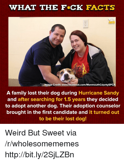 Counselor: WHAT THE F CK FACTS  FACTS  tmage Credit: www.facebook.com/MonmouthCountySPC  A family lost their dog during Hurricane Sandy  and after searching for 1.5 years they decided  to adopt another dog. Their adoption counselor  brought in the first candidate and it turned out  to be their lost dog! Weird But Sweet via /r/wholesomememes http://bit.ly/2SjLZBn