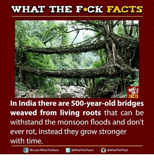 Withstanded: WHAT THE FCK FACTS  FACTS  In India there are 500-year-old bridges  weaved from living roots that can be  withstand the monsoon floods and don't  ever rot, instead they grow stronger  with time.  E WhatTheFFacts  FB.com/WhatThe Facts  @What TheFFact