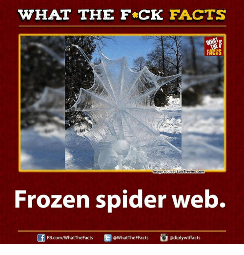 Spider Webbed: WHAT THE FCK FACTS  FACTS  LuisTrevino com  mage Source  Frozen spider web  @diplywtffacts  FB.com/WhatTheFacts  @WhatTheFFacts