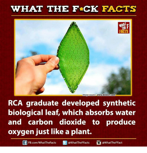 rca: WHAT THE FCK FACTS  www.dezeen.com  mage Source  RCA graduate developed synthetic  biological leaf, which absorbs water  and carbon dioxide to produce  oxygen just like a plant.  WhatTheFFacts  FB.com/WhatTheFacts  @WhatTheFFact