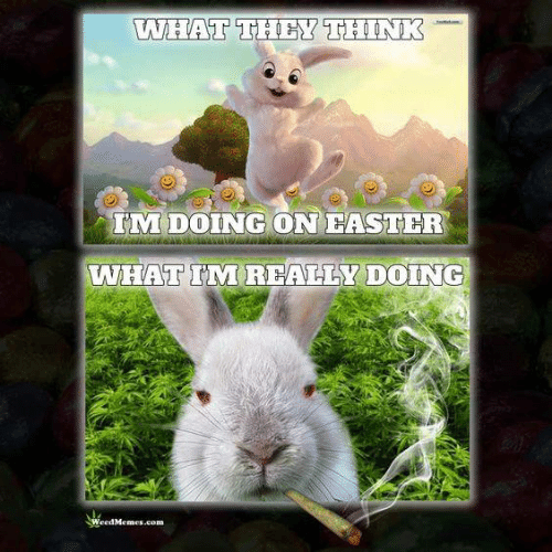 Weed Memes: WHAT THEY THINK  IM DOING ON FASTER  WHATTTTREALLY DOING  Weed Memes.com