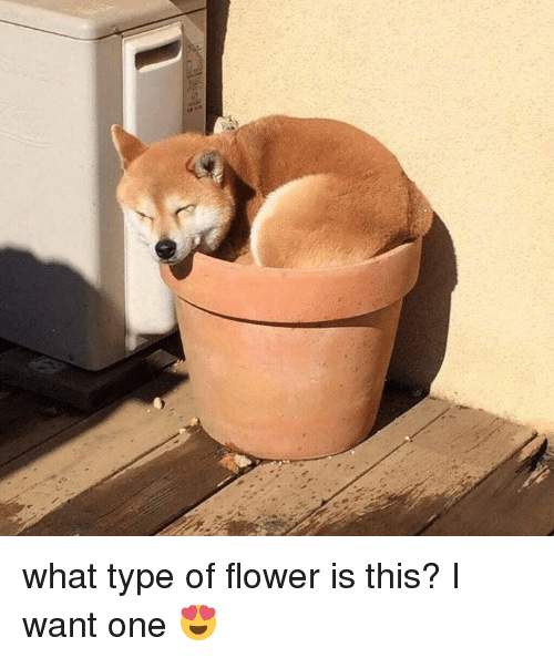 What type of flower is this?
