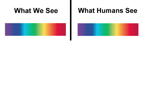 What, Humans, and  See: What We See  What Humans See