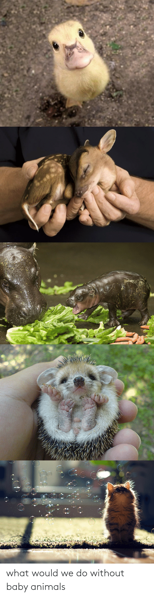 What Would: what would we do without baby animals