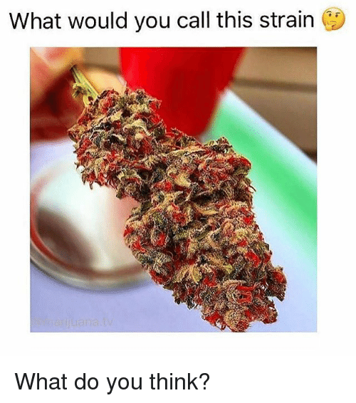 Memes, 🤖, and Strain: What would you call this strain ( What do you think?