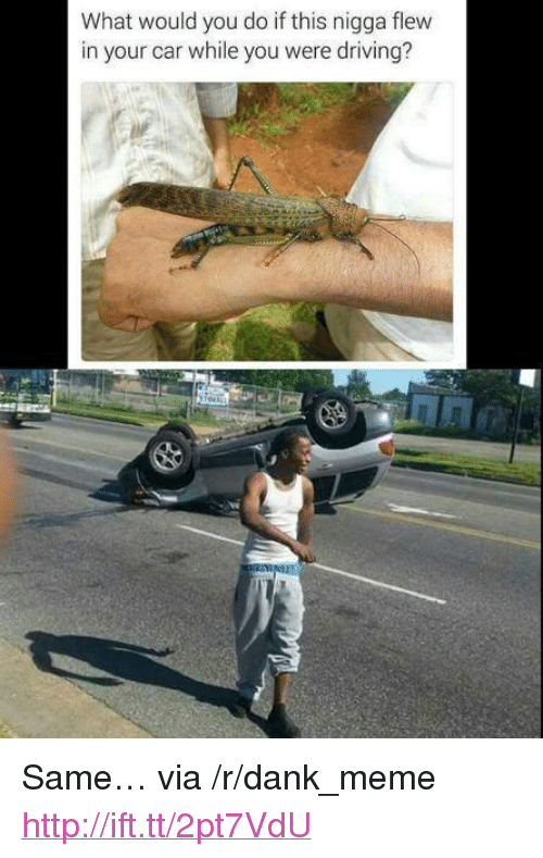 """dank: What would you do if this nigga flew  in your car while you were driving? <p>Same&hellip; via /r/dank_meme <a href=""""http://ift.tt/2pt7VdU"""">http://ift.tt/2pt7VdU</a></p>"""