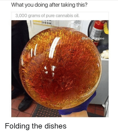 Cannabies: What you doing after taking this?  3,000 grams of pure cannabis oil.  ee Folding the dishes