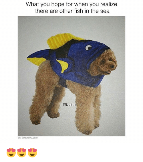 Memes, Buzzfeed, and Fish: What you hope for when you realize  there are other fish in the sea  @bustle  via buzzfeed.com 😍😍😍