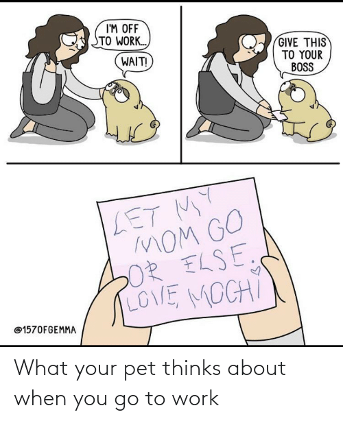 pet: What your pet thinks about when you go to work