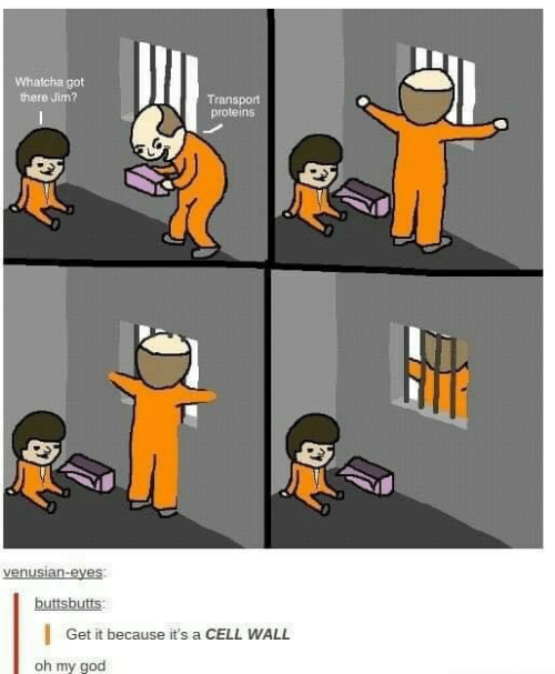goo: Whatcha got  there Jim?  Transport  proteins  buttsbutts  |Get it because it's a CELL WALL  oh my goo