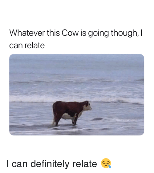 Definitely, Cow, and Can: Whatever this Cow is going though, I  can relate I can definitely relate 😪