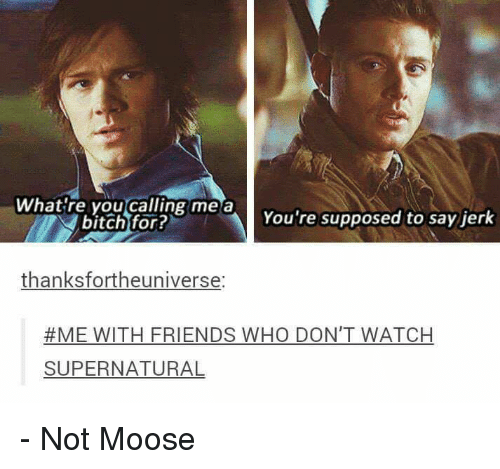 watch supernatural: What're you calling me a  You're supposed to say jerk  bitch for?  thanksfortheuniverse:  #ME WITH FRIENDS WHO DON'T WATCH  SUPERNATURAL - Not Moose