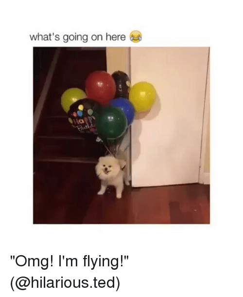 "im flying: what's going on here ""Omg! I'm flying!"" (@hilarious.ted)"