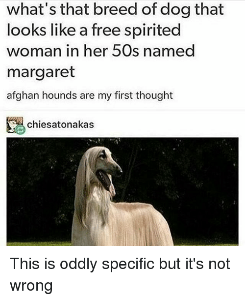 Memes, 🤖, and Woman: what's that breed of dog that  looks like a free spirited  woman in her 50s named  margaret  afghan hounds are my first thought  chiesatonakas This is oddly specific but it's not wrong