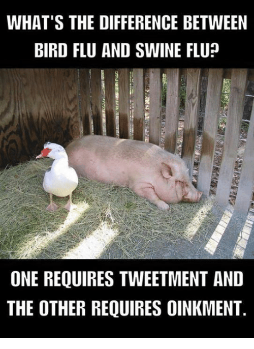 what s the difference between bird flu and swine flu one