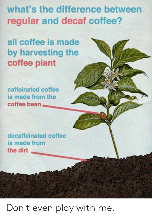decaf coffee: what's the difference between  regular and decaf coffee?  all coffee is made  by harvesting the  coffee plant  caffeinated coffee  is made from the  coffee bean  decaffeinated coffee  is made from  the dirt Don't even play with me.