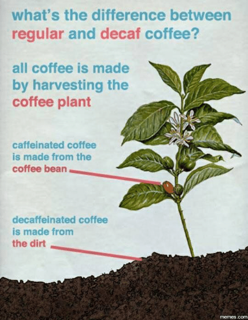 decaf coffee: what's the difference between  regular and decaf coffee?  all coffee is made  by harvesting the  coffee plant  caffeinated coffee  is made from the  coffee bean  decaffeinated coffee  is made from  the dirt  memes.com