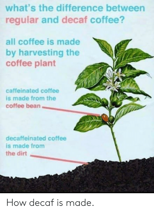 decaf coffee: what's the difference between  regular and decaf coffee?  all coffee is made  by harvesting the  coffee plant  caffeinated coffee  is made from the  coffee bean  decaffeinated coffee  is made from  the dirt How decaf is made.