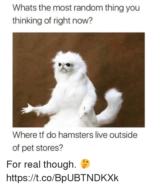 Live, Random, and Pet: Whats the most random thing you  thinking of right now?  Where tf do hamsters live outside  of pet stores? For real though.  🤔 https://t.co/BpUBTNDKXk